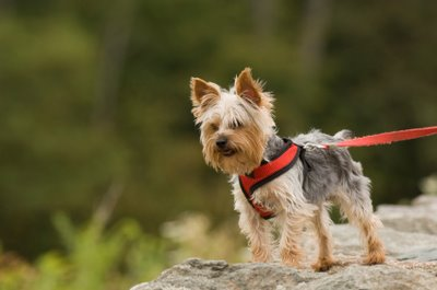 Get your pooch outside this summer