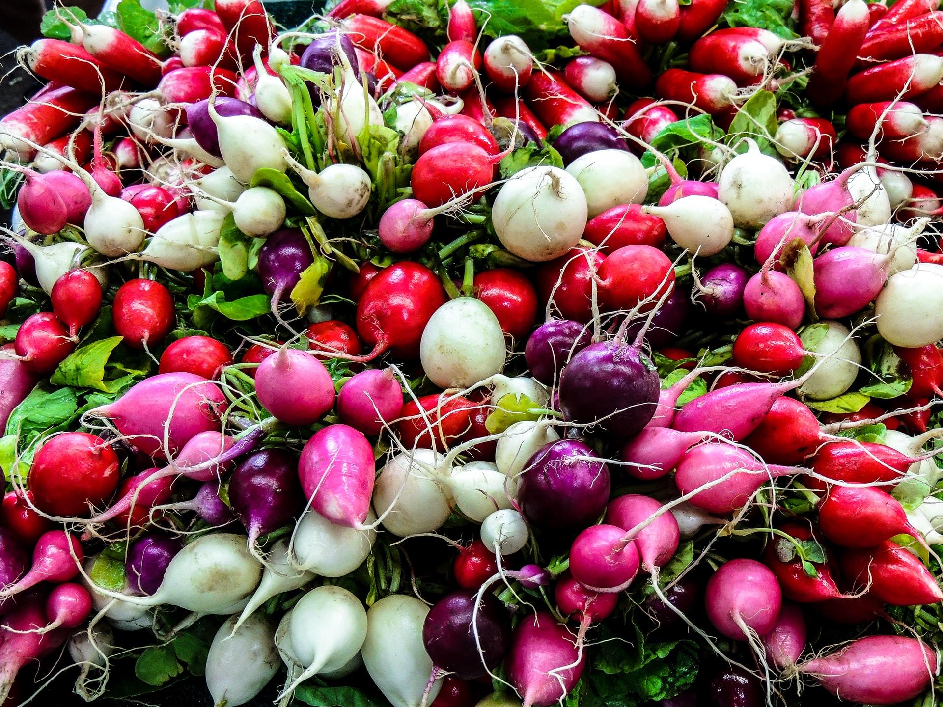 Stock Up on Seasonal Produce at Copley Square Farmers Market